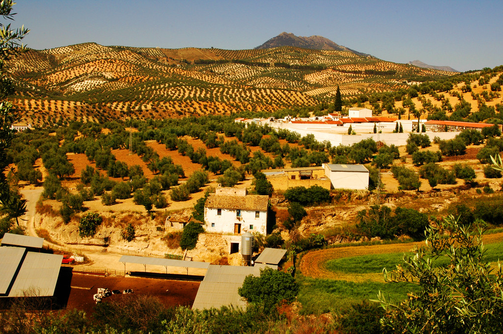 Andalusian Countryside, Spain.