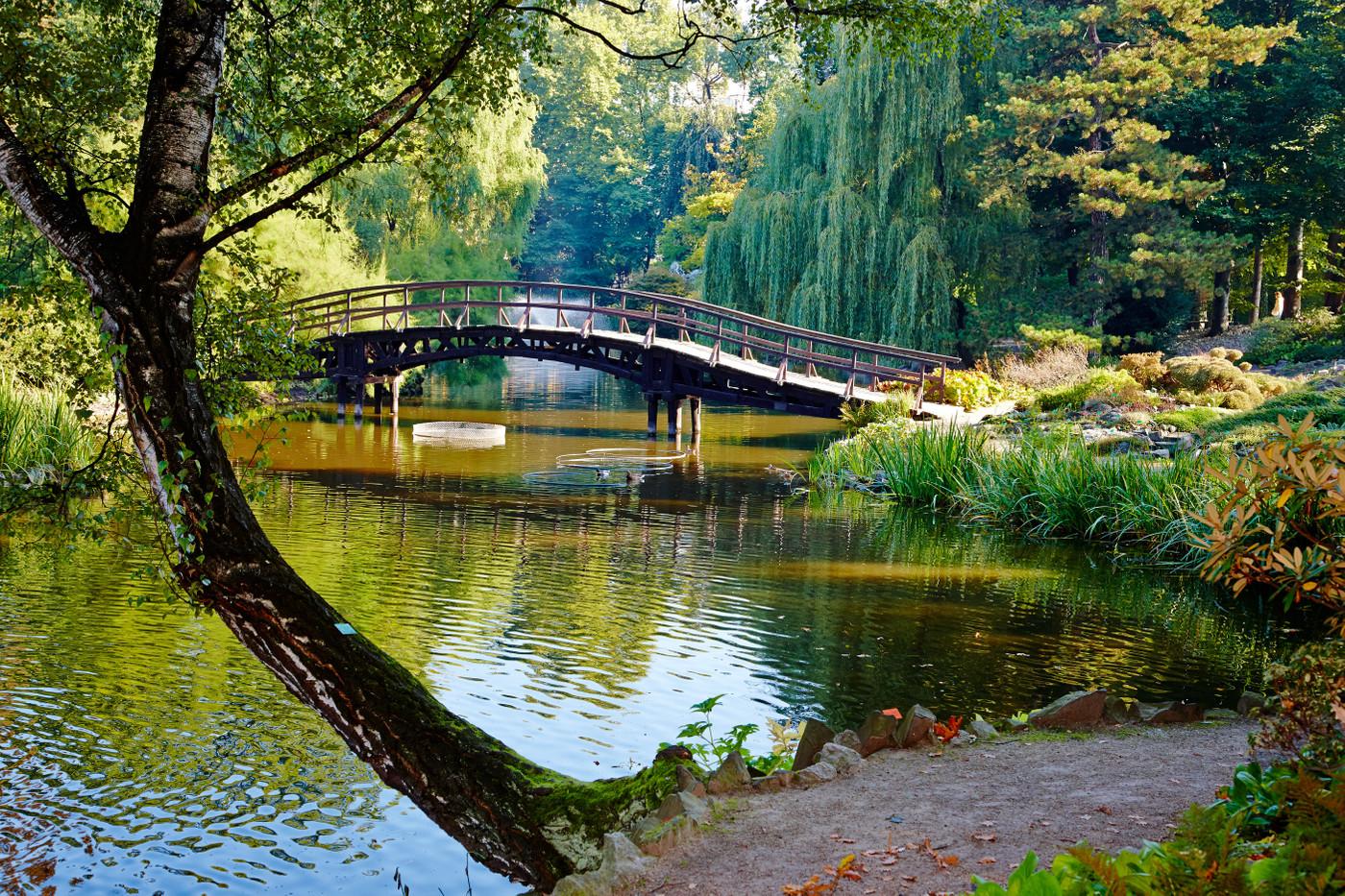 Japanese Garden, Wrocław