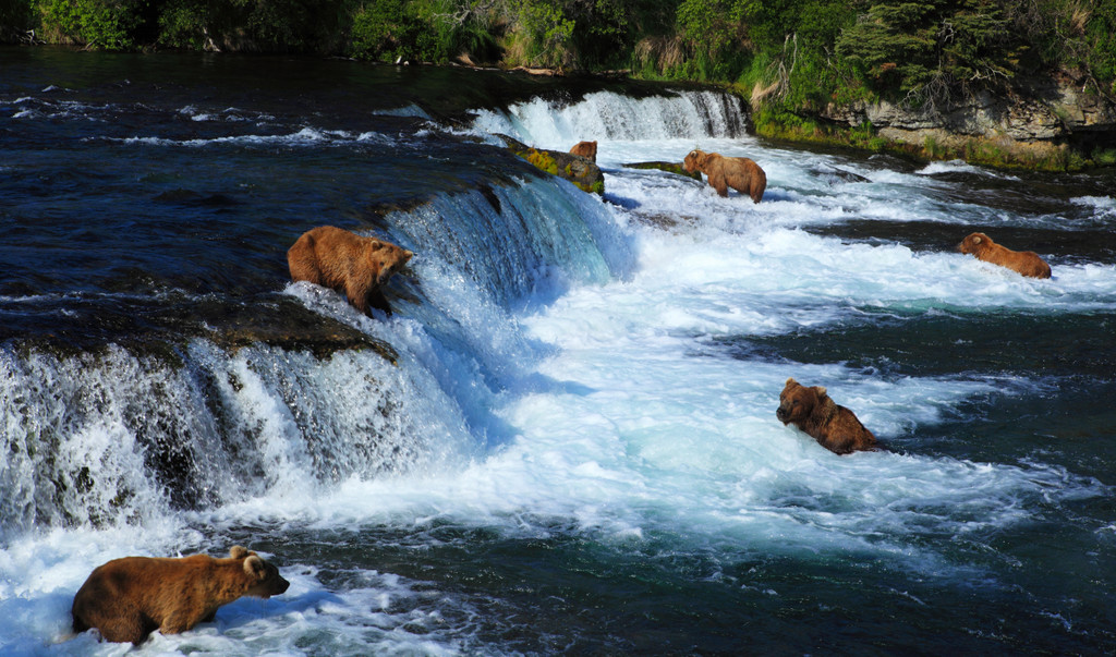 Katmai National Park and Preserve, King Salmon