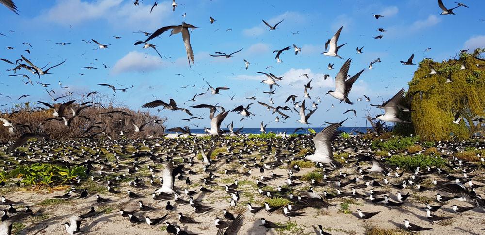 Bird Island, Seychelles. ed1204/Shutterstock.com