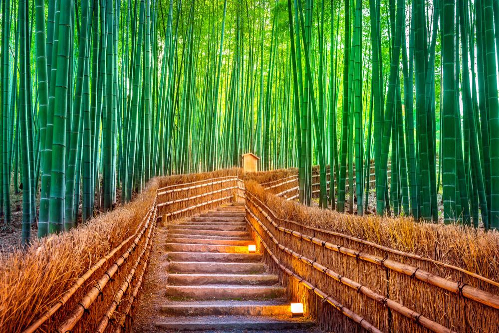 Arashiyama Bamboo Grove, Kyoto, Kyoto Prefecture, Japan.