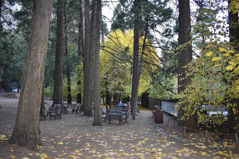Curry Village Pizza Patio, Yosemite Valley