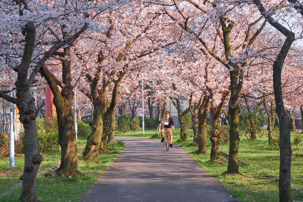 Bike ride through Osaka in spring, Osaka, Japan. jean-francois me / Shutterstock.com