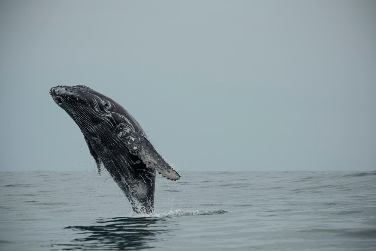 Whale spotting in Uvita, Costa Rica.