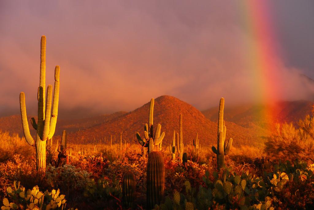 Saguaro National Park East, East