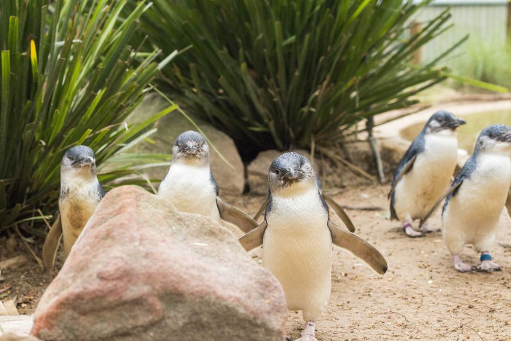 Phillip Island, Australia.