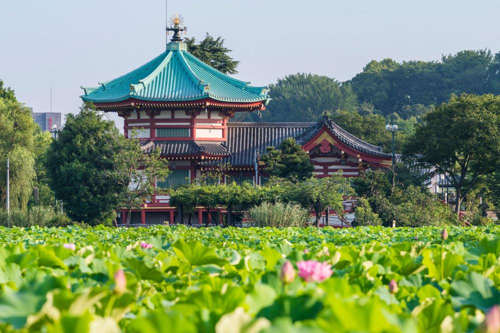 Lotus Pond in Ueno, Tokyo, Japan.