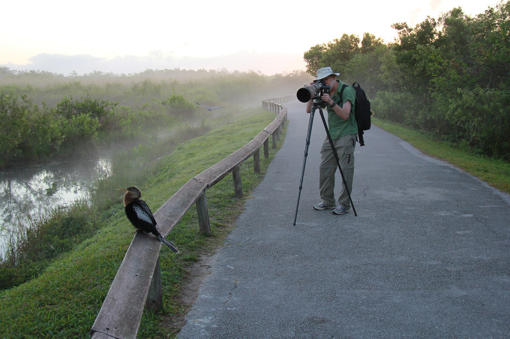 Anhinga Trail, Homestead