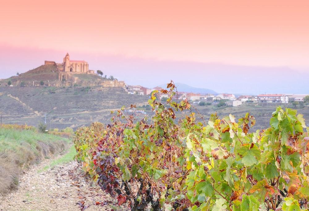 Vineyards, La Rioja, Spain.