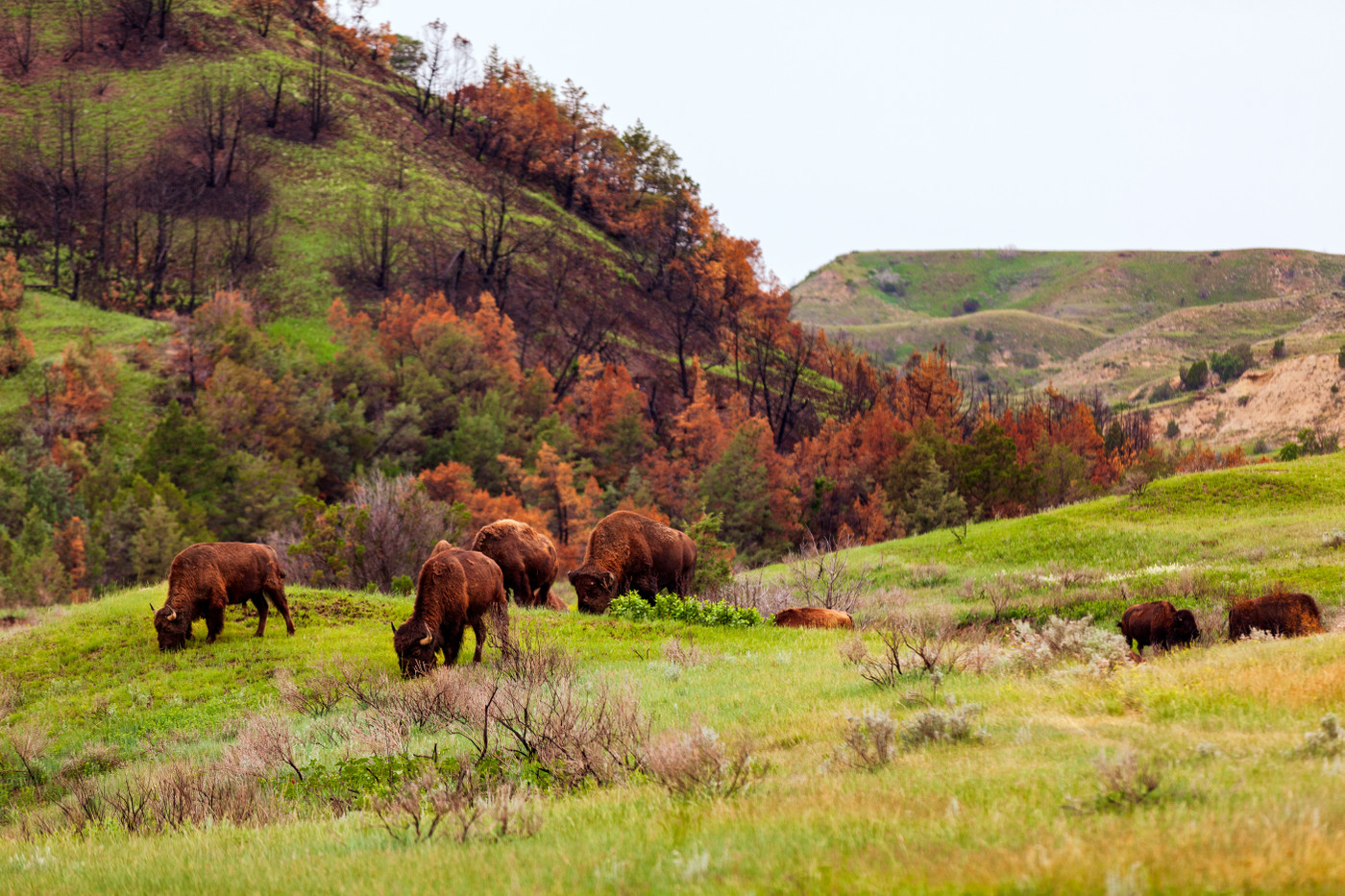Theodore Roosevelt National Park,