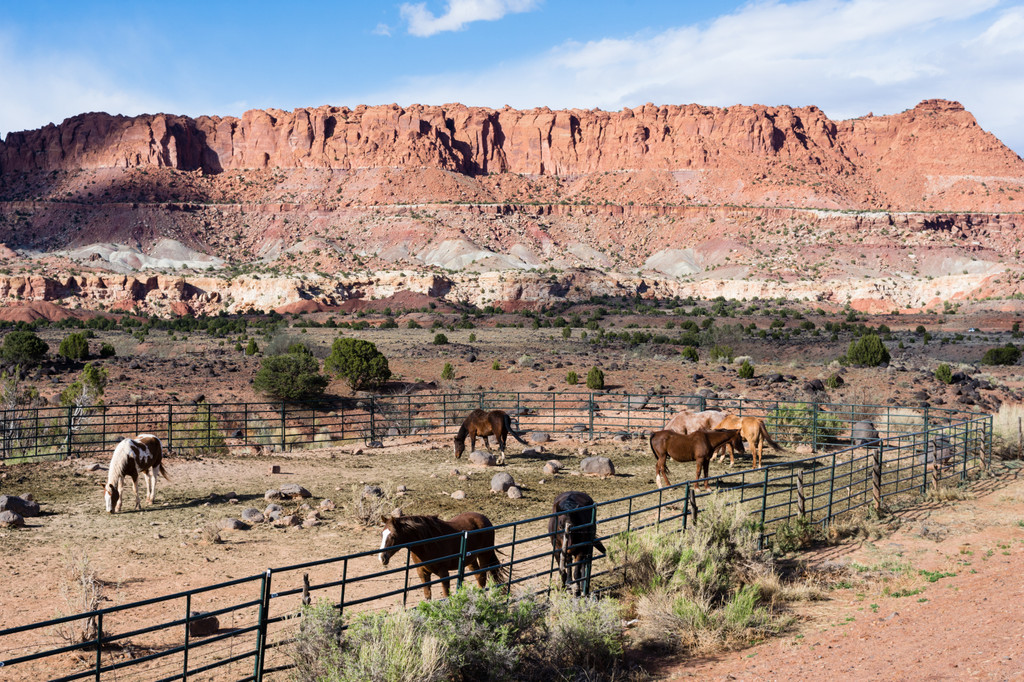 Capitol Reef National Park,