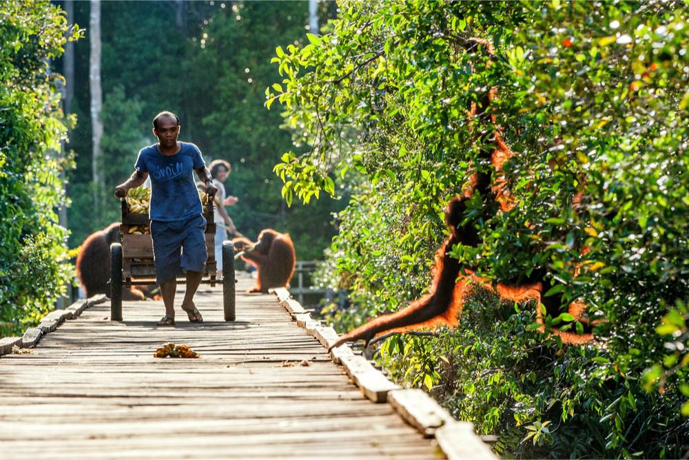 Camp Leakey, Borneo Island, Indonesia. Sergey Uryadnikov/Shutterstock.com