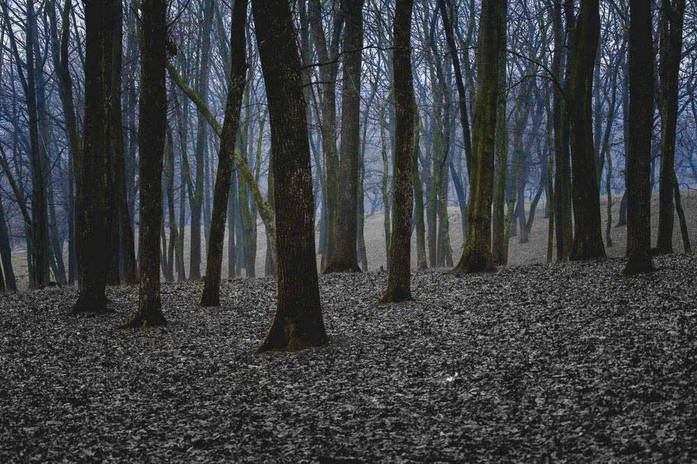 Aokigahara Suicide Forest, Fujinomiya-shi, Japan.