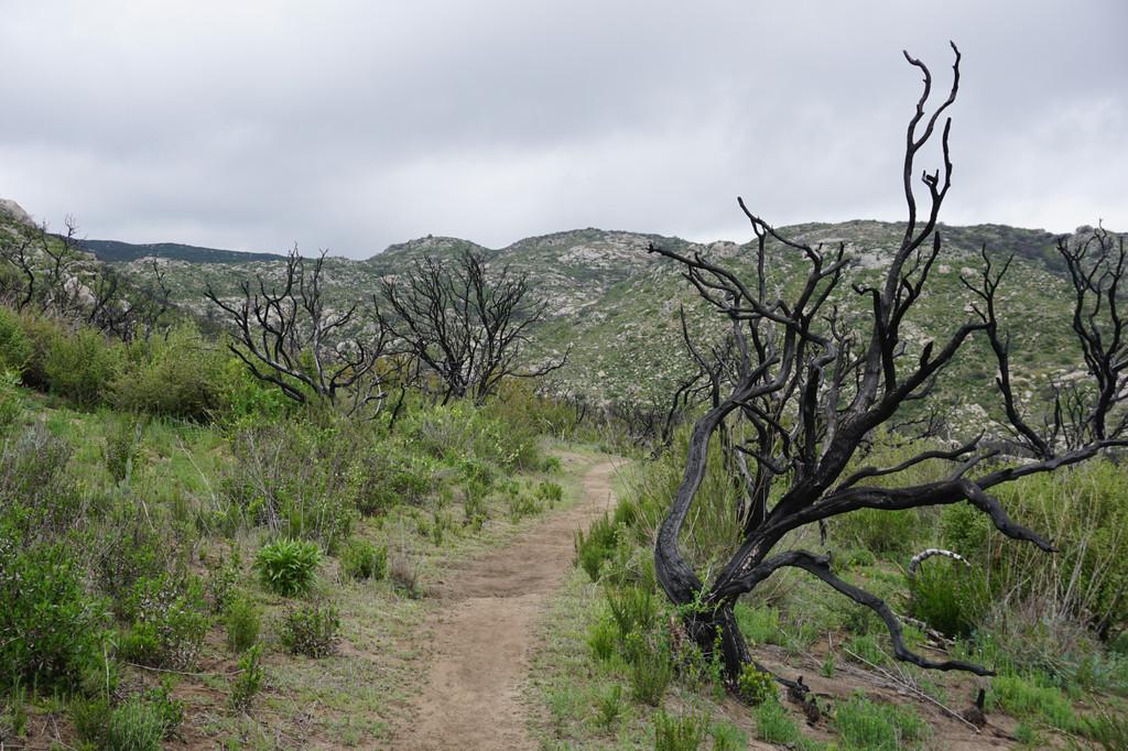 Devastated Area Loop Trail, Mineral