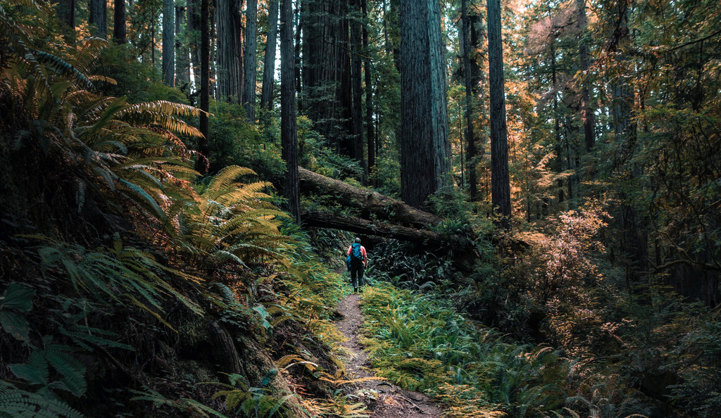 Redwood National and State Parks,