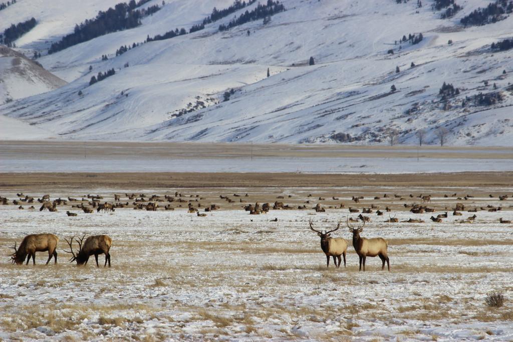 National Elk Refuge, Kelly