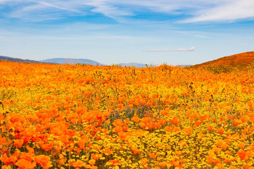 Antelope Valley California Poppy Reserve State Natural Reserve, Lancaster