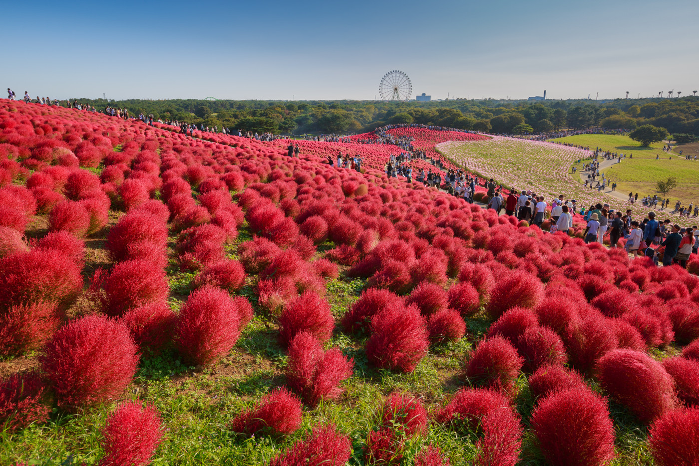 Hitachi Seaside Park, Hitachinaka