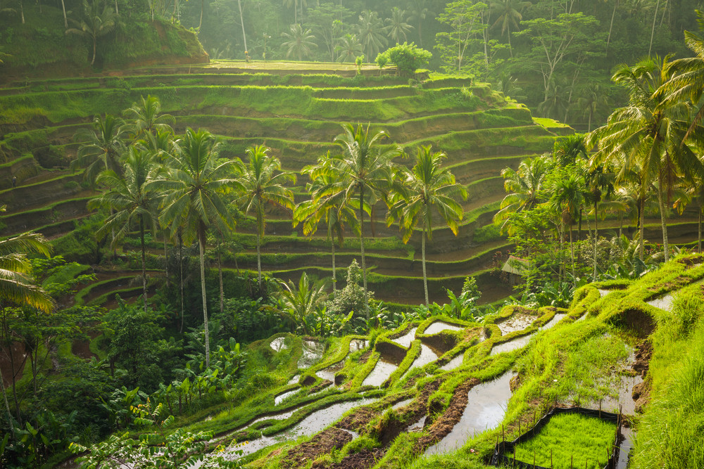 Tegalalang Rice Terraces, Bali, Indonesia.
