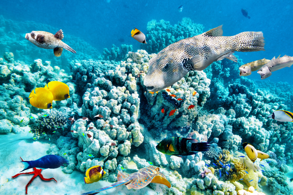 Colorful coral reefs, Great Barrier Reef, Australia.