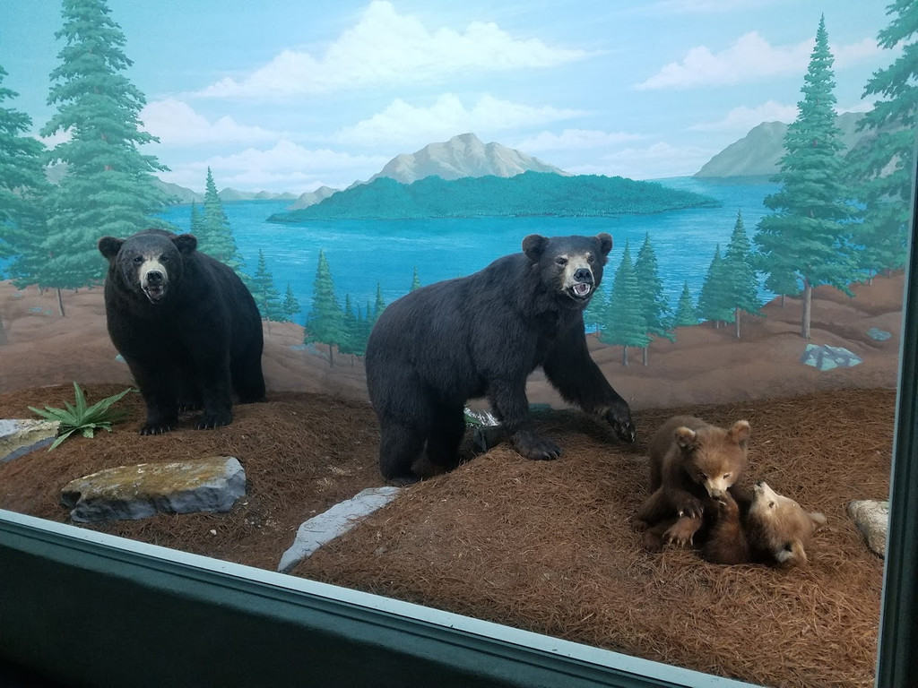 Mammoth Cave Wildlife Museum, Cave City