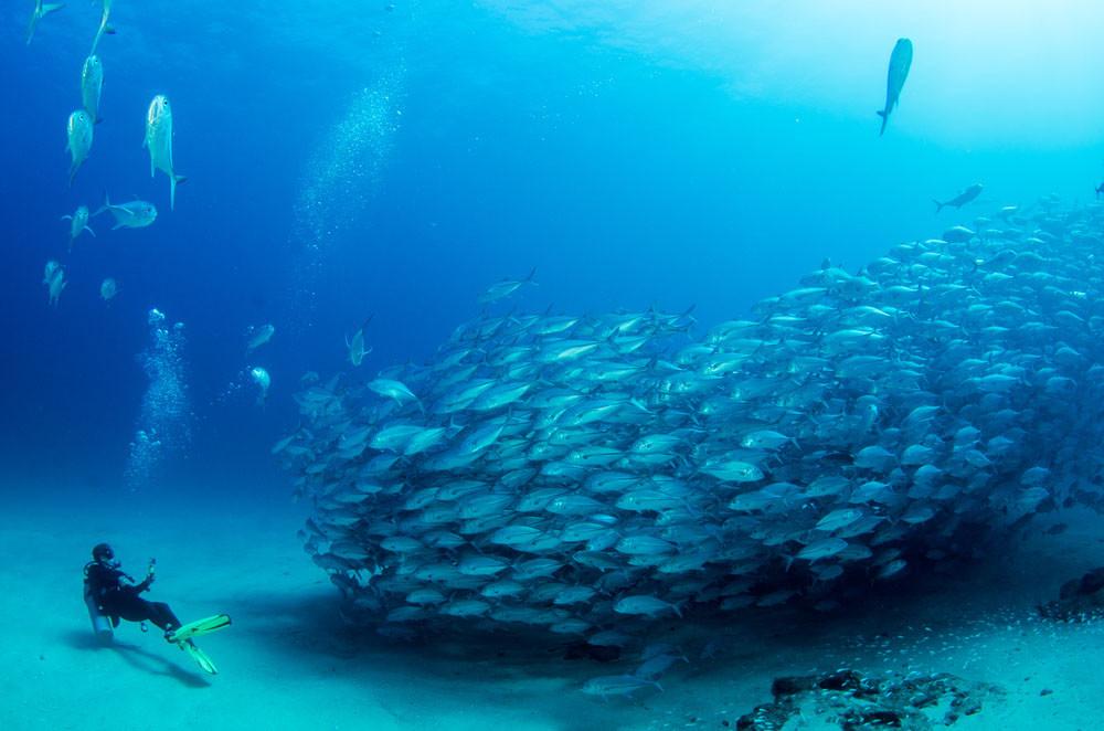 Divers near Cabo Pulmo National Park, Cabo Pulmo, Mexico.