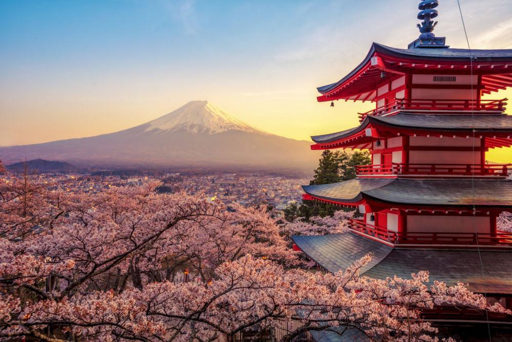 Fuji Shibazakura Festival, Mt. Fuji, Japan.