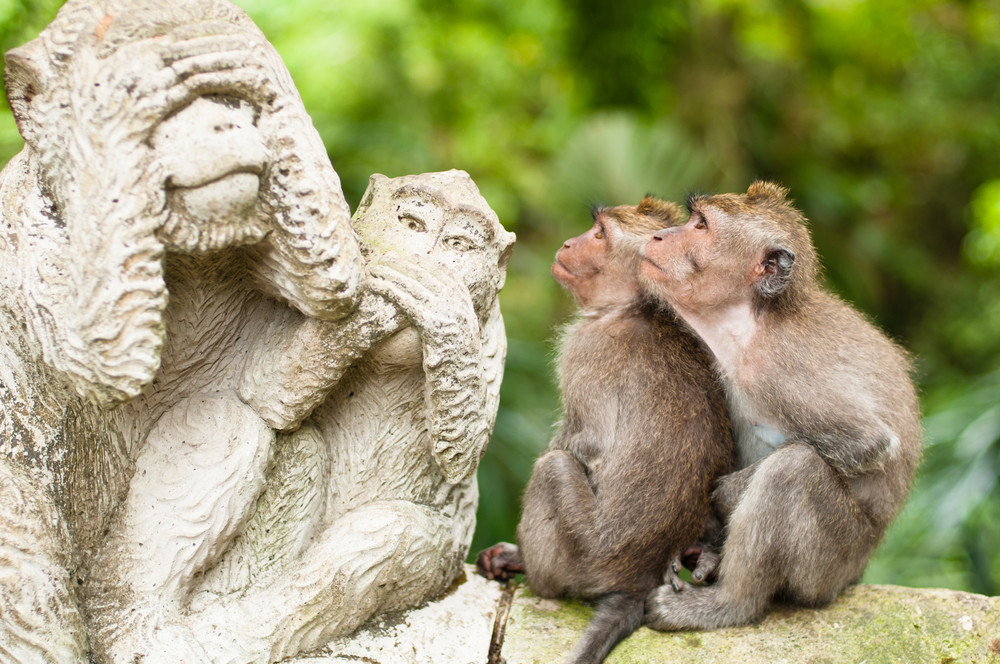 Monkey Forest, Ubud, Bali, Indonesia.