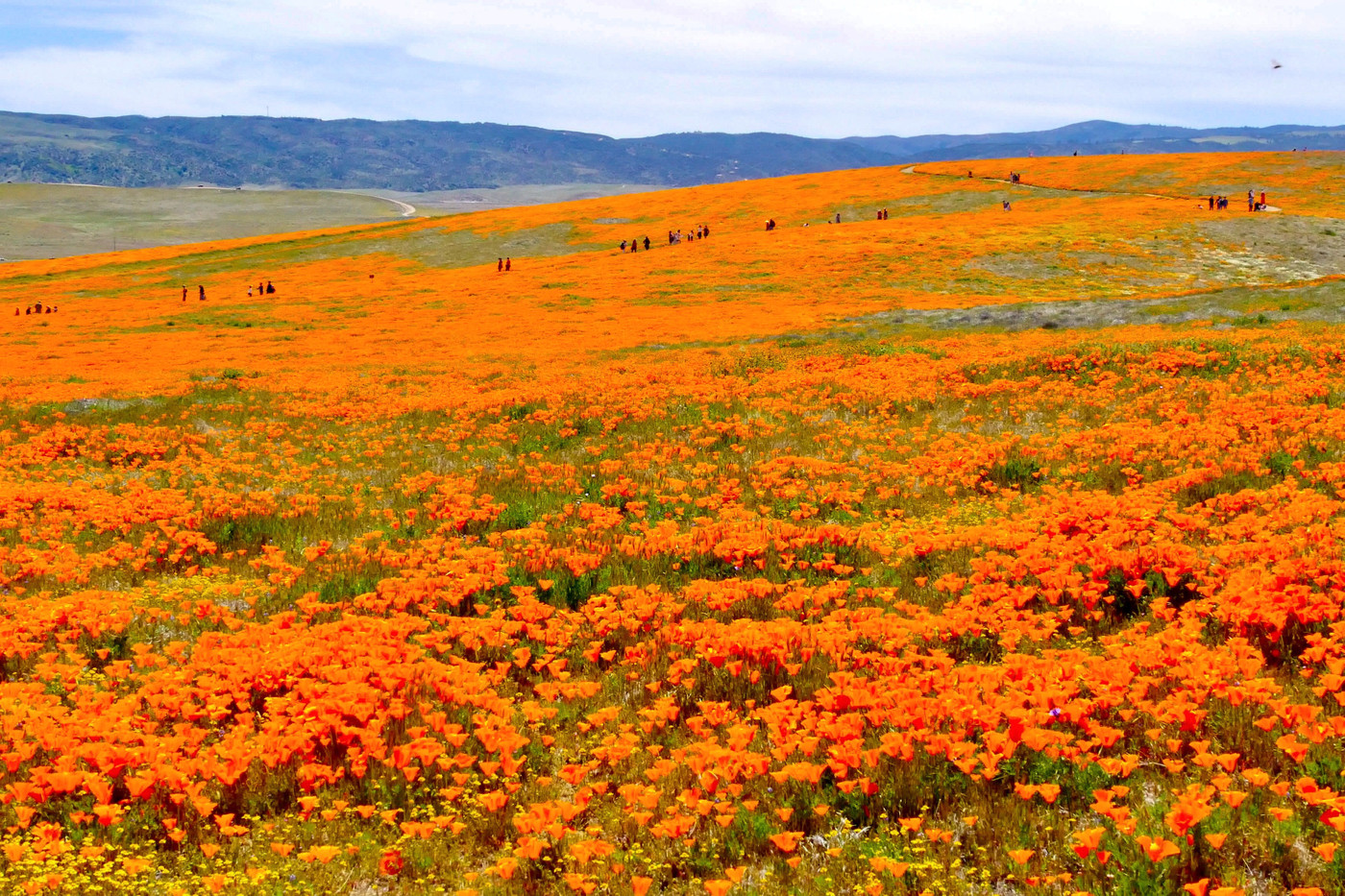 Antelope Valley California Poppy Reserve State Natural Reserve, Lancaster