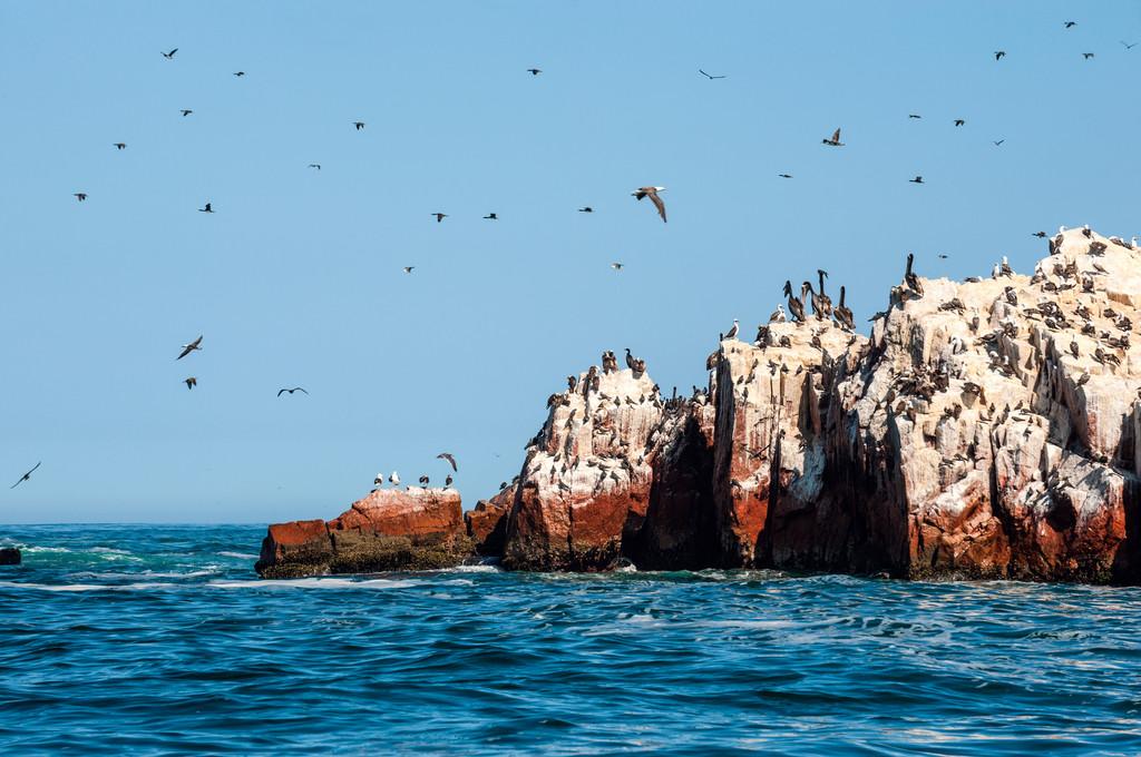 Islas Ballestas, Ballestas