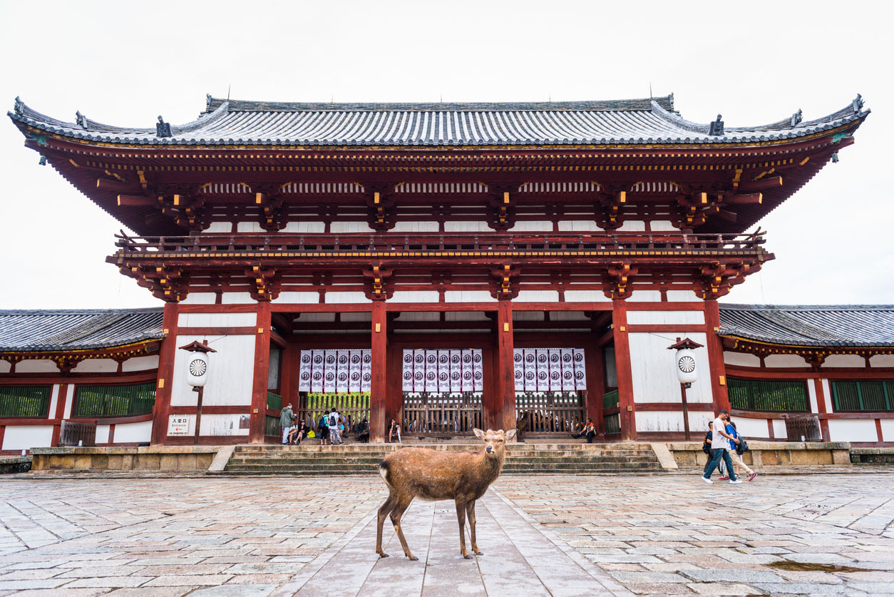 One deer standing in front of the Todai-ji temple in Nara, Japan. superjoseph/istockphoto.com