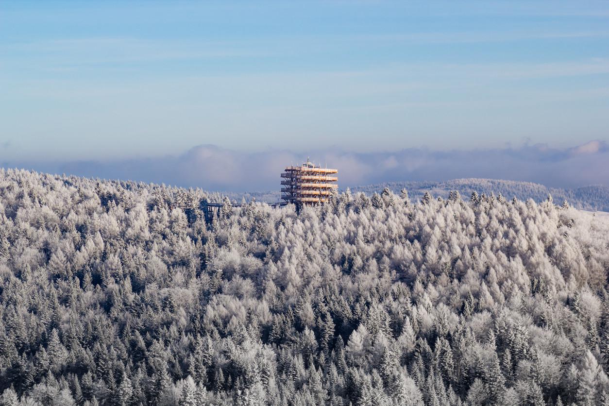 Treetop observation tower, Krynica-Zdroj, Poland.