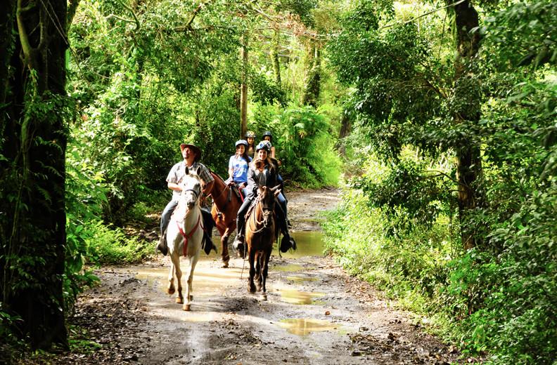 Monteverde Cloud Forest Reserve, Monteverde, Costa Rica. horsetrekmonteverde.com