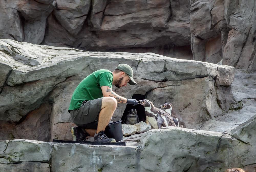 Krakow Zoo, Krakow, Poland. Elena Kirey/Shutterstock.com