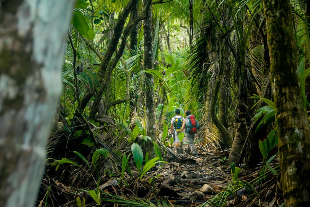 Monteverde Cloud Forest Reserve, Monteverde, Costa Rica.