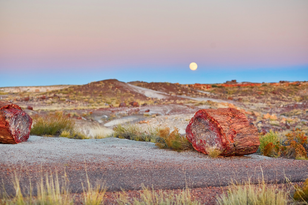 Petrified Forest National Park, Petrified Forest National Park