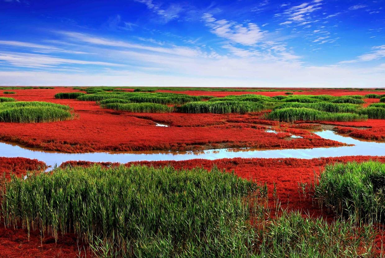 红海滩, Panjin