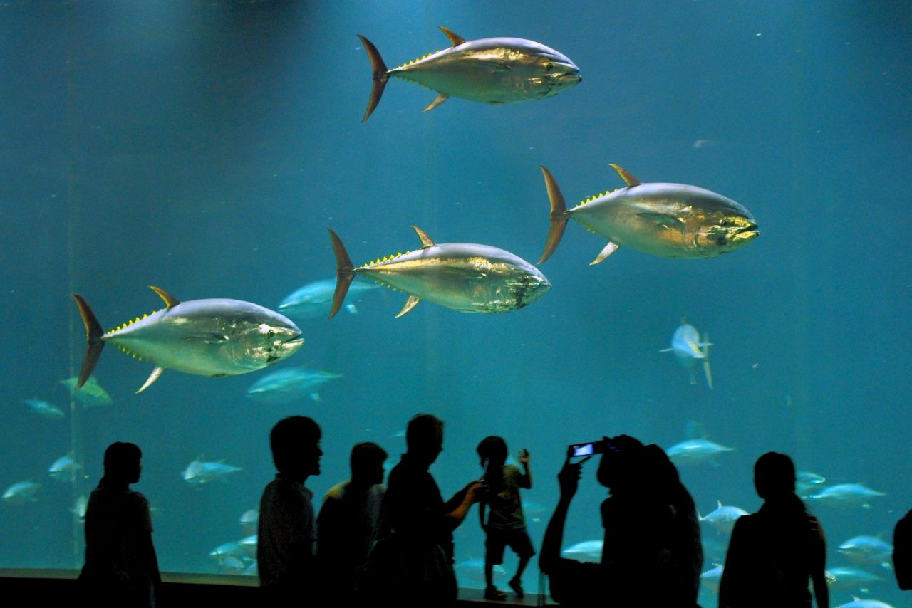 Tokyo Sea Life Park, Tokyo, Japan.