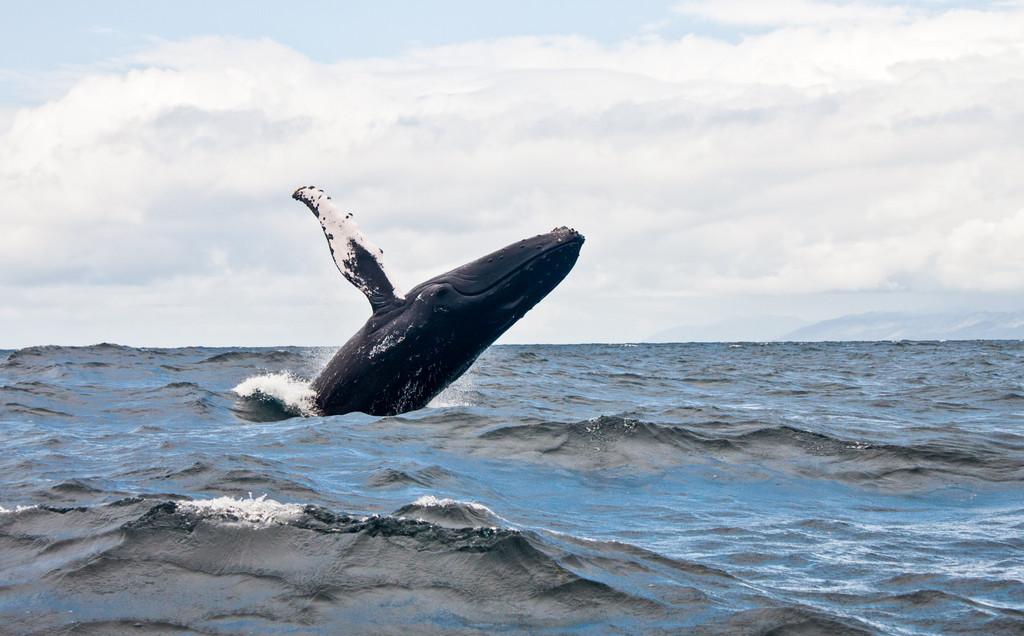 Bar Harbor Whale Watch Co, Bar Harbor