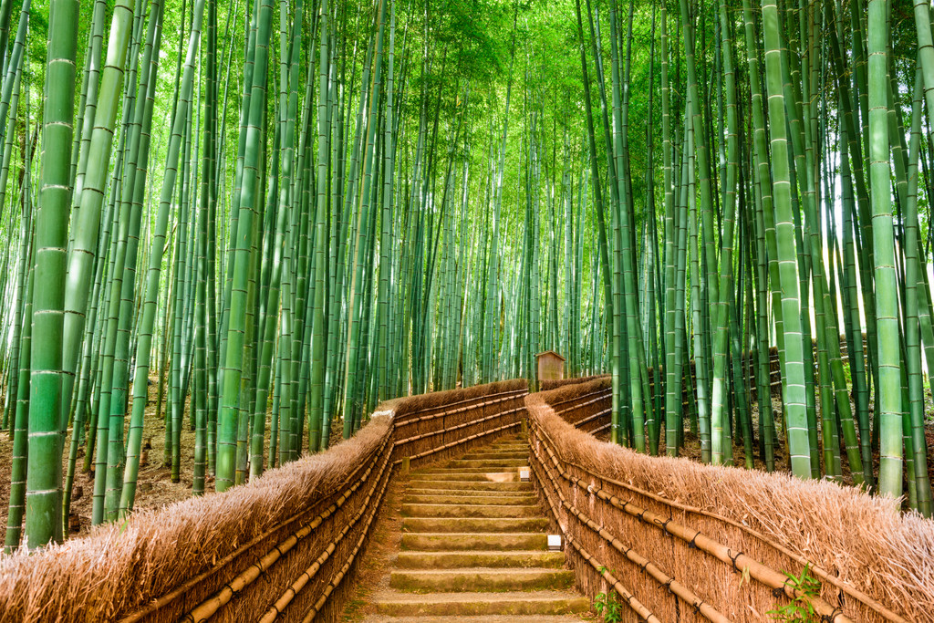 Bamboo Forest, 京都市